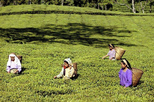 In West Bengal Shut Tea Gardens Force Girls To Resort To Prostitution